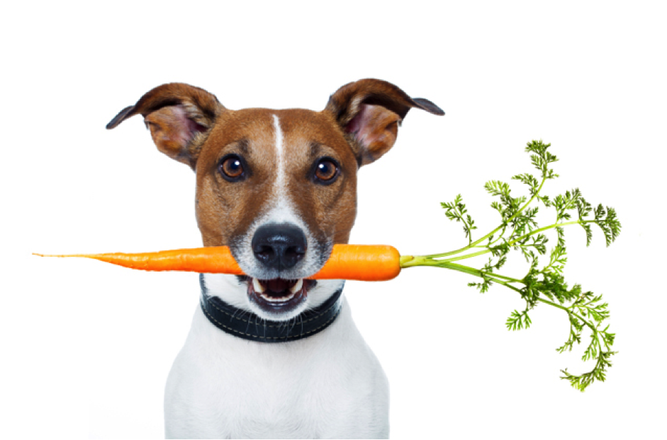 AliRamseyDogTrainer-dog eating carrot