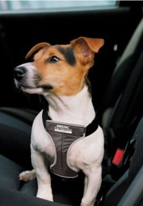 JRT in car harness