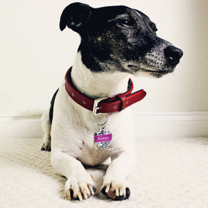 dog and id tag