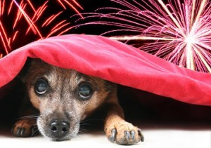 dogs-scared-of-fireworks-300x211